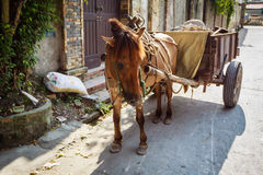 A horse and carriage awaits passengers Royalty Free Stock Photography