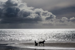 Horse and carriage on the beach Royalty Free Stock Photo
