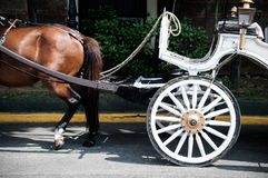 Horse&Carriage. Brown horse and white carriage royalty free stock images