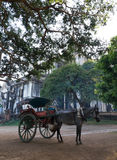 Horse carriage in Burma Stock Image