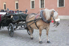 Horse and Carriage in Castle Square; Warsaw Stock Photos