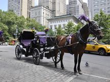 Horse Carriage at Central Park in Midtown Manhattan from New York City in United States. On the 1st July 2017 royalty free stock image