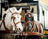 Horse carriage in city Stock Images