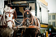 Horse carriage in city Stock Photo