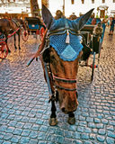 Horse in Carriage in the City Center of Rome Stock Photo