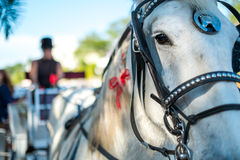 Horse and Carriage. Close up of a horse and carriage, use of selective focus on horse eye Stock Image