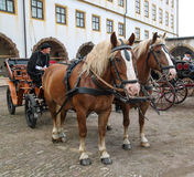 Horse carriage with the coachman Royalty Free Stock Images