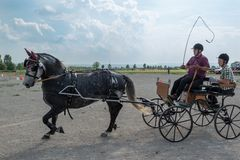 Horse Carriage Competition Stock Image