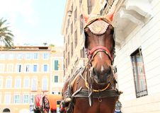 Horse with carriage Stock Image