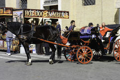 Horse carriage with driver stock photo