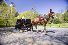 Horse and carriage drives through Central Park Manhattan, New York City, New York Stock Image