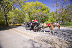 Horse and carriage drives through Central Park Manhattan, New York City, New York Royalty Free Stock Photos