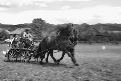 Horse carriage driving. On gallop, black and white Stock Photo