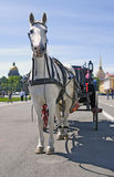 Horse carriage on Dvortsovaya Square in Saint-Petersburg city, Russia. Royalty Free Stock Image