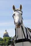 Horse carriage on Dvortsovaya Square in Saint-Petersburg city, Russia. Royalty Free Stock Photos