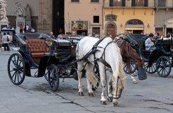Horse carriage in Florence Royalty Free Stock Photo