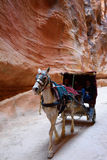 Horse carriage in a gorge, Siq canyon in Petra Stock Image