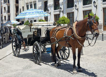 Horse and carriage for hire. In Ronda, Malaga Province Andalusia Spain Royalty Free Stock Images