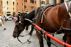Horse, carriage horses Royalty Free Stock Photography