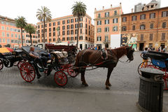 Horse, carriage horses Royalty Free Stock Photo