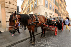 Horse, carriage horses Royalty Free Stock Image