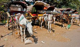 Horse and carriage in India royalty free stock photography