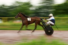 Horse carriage and jockey Royalty Free Stock Photos