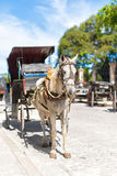 Horse carriage in Old Havana Royalty Free Stock Photo