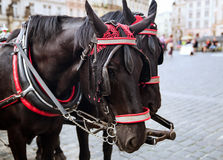 Horse Carriage at the Old Square in Prague, Czech Republic. Father and him Son Look at Horse Carriage at the Old Square in Prague, Czech Republic. Concept of Royalty Free Stock Photo