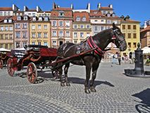 Horse in a Carriage at Old Town Market Square, Warsaw, Poland. Horse in a Carriage at the Old Town Market Square, Warsaw, Poland Royalty Free Stock Images