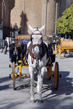 Horse and carriage in front of Seville Cathedral Royalty Free Stock Photos