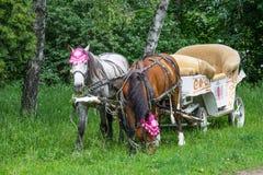 Horse, carriage. Stock Photos