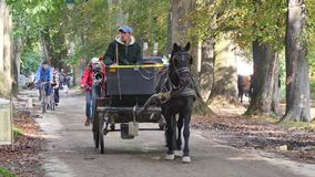 Horse Carriage in Park stock video footage