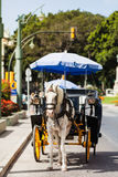 Horse carriage parked in andalusia, spain. Royalty Free Stock Photos