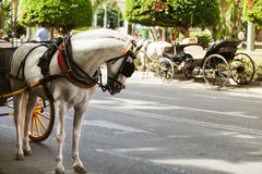 Horse carriage parked in andalusia, spain Stock Photos