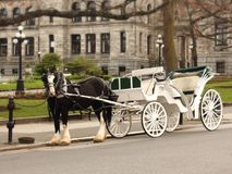 Horse and Carriage at Parliament Building Victoria British Columbia Canada. A traditional horse pulled carriage wagon ride is a popular tourist attraction in royalty free stock images
