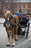 Horse and Carriage Philadelphia Stock Photography