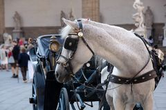 Horse carriage on Piazza Royalty Free Stock Image