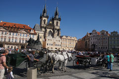 Horse and carriage in   Prague Stock Photos