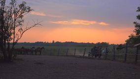 Horse carriage and ranch horses in sunset. Two unrecognizable people riding horse carriage and passing by the horse ranch farm in sunset, 4k uhd footage stock video