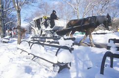 Horse carriage ride in Central Park, Manhattan, New York City, NY after winter snowstorm Stock Photo