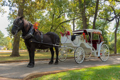 Horse and Carriage Ride in a forest Stock Photos