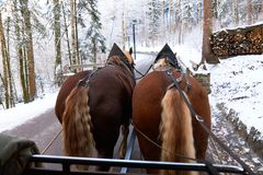 Horse carriage ride through forest. Winter landscape, view from horse carriage Stock Photos