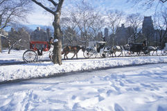 Free Horse Carriage Ride In Central Park, Manhattan, New York City, NY After Winter Snowstorm Royalty Free Stock Image - 52270536