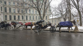 Horse carriage ride in Quebec, Canada. Stock Image