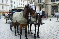Horse carriage ride in Vienna Royalty Free Stock Images