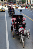 Horse and Carriage Rides in Central Park Stock Images