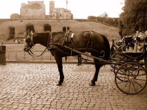 Horse and carriage in Rome Stock Images