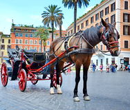 Horse carriage for tourists. Horse pulling carriage for tourists in street of Rome, Italy Royalty Free Stock Photos