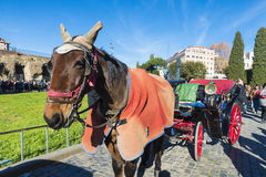 Horse carriage for tourists in Rome, Italy Stock Photography